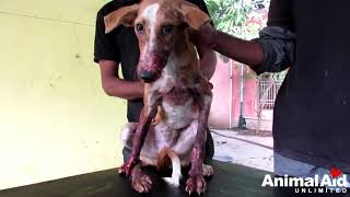 Download Brutally injured puppy DEFIES ALL ODDS-Watch his astounding transformation Video