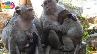 Download Sweetpea jealous Jessie milk her mother | Sweetpea Group | monkey daily MD36 Video