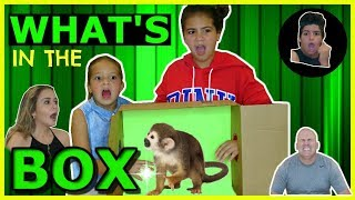 Download WE USED LIVING ANIMALS ( WHAT'S IN THE BOX CHALLENGE″ Video