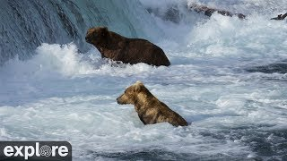 Download Brooks Falls Brown Bears Low powered by EXPLORE.org Video