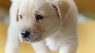Download The Best Dogs Of BBC Earth | Top 5 | BBC Earth Video