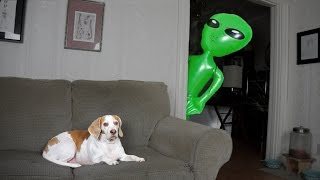 Download Dog Pranked with Alien: Funny Dog Maymo Video