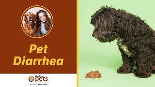 Download Dr. Becker Discusses Pet Diarrhea Video