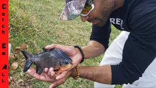 Download Catching BABY PACU and BABY TURTLES with BARE HANDS! Video