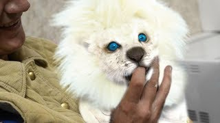 Download Most EXPENSIVE Pets In The World! Video