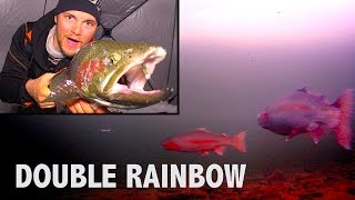 Download Hectic Rainbow Trout Double - Barbe Lake, Manitoba Video