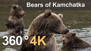 Download 360°, Bears of Kamchatka. Kambalnaya River, 4K aerial video Video