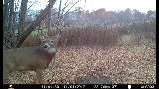 Download Trail Cam Strategies For Increasing Daytime Buck Movement Video