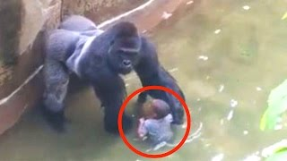 Download Kind fällt in Gorilla-Gehege - RIP Harambe Video