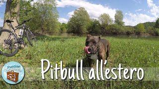 Download Pitbull all'estero - #Puntata-359 Video