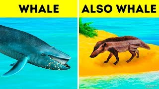Download Why Whales Became the Biggest Animal of All Time Video