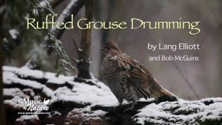 Download Ruffed Grouse Drumming Video