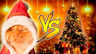 Download Funny Cats vs Christmas Trees - Funny Cats And Christmas Tree - Funny Cats 2016 Video