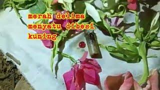 Download ⚪️ Live Penarikan Merah Delima Menyatu di Wesi Kuning Video