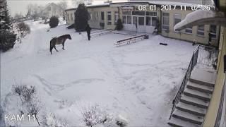 Download Koń Tadzik wymierza karę opiekunowi - polskie napisy Video