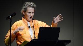 Download Temple Grandin: ″The Autistic Brain″ Video