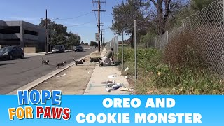 Download OMG! Oreo races to protect Cookie Monster. Now both are looking for a home. Please share. Video