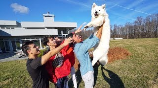Download WE REUNITED WITH OUR PUPPY AFTER A YEAR! (emotional) Video