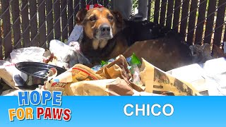 Download Laying on a pile of trash without moving, I feared something was terribly wrong. Video