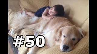 Download The Japanese baby and Golden retriever are so cute! Kind! Video