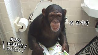 Download 여느 가정집의 흔한 아침 풍경 ㅣ Ordinary Morning Scenery Of A Family With Chimpanzees Video