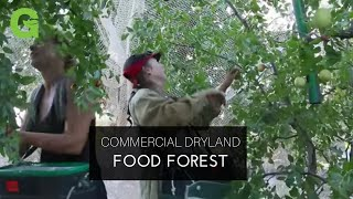 Download Commercial Dryland Food Forest Video