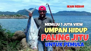 Download CARA PASANG UMPAN IKAN HIDUP PALING AMPUH UNTUK TEKNIK MANCING PINGGIRAN Video