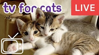 Download Videos for Cats! Entertainment for Cats with Relaxing Music Video
