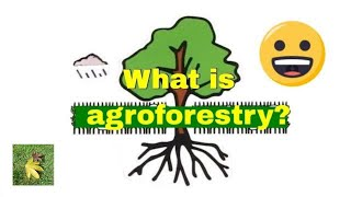 Download What is #Agroforestry ? Video