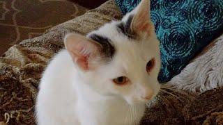 Download Kitten Close Up 2017-10-05 Video