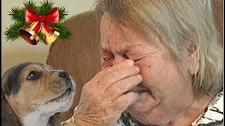 Download People's Reactions To Kitten And Puppy Surprise On Christmas Compilation 2017 Video