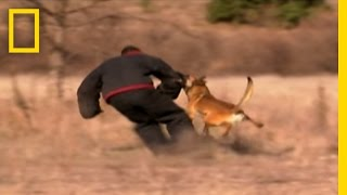 Download Dog Attack Styles | National Geographic Video