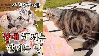 Download 고양이에게 절대해서 안되는말을 했다!! 충격받은 고양이들 - 크리스마스의 악몽 Video