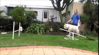 Download Teach your dog the See-Saw | Zac & Lucy's agility Video