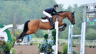 Download Equestrian Motivational (Don't give up !)-HD Video