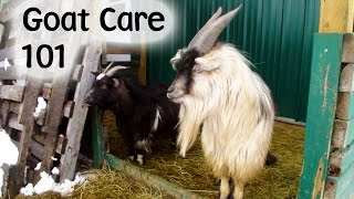 Download Goats - Caring for and Feeding Video