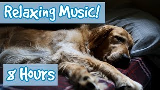 Download Relaxing Music for Anxious Dogs! Soothe your Dog and Calm Their Nerves with this Tranquil Music! 🐶 Video