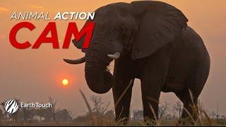 Download Elephant herd investigate GoPro Video