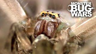 Download Jumping Jack Ants Vs Green Bellied Huntsman Spider | MONSTER BUG WARS Video