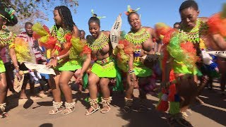 Download Maidens from South Africa at the Umhlanga Reed Dance in Swaziland Video