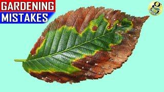 Download 15 MAJOR GARDENING MISTAKES | Gardening Tips for Beginners Video