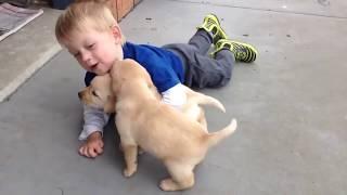 Download 아기와 교감하는 사랑스런 강아지 영상 모음 Video