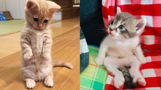 Download Baby Cats - Cute and Funny Cat Videos Compilation #17 | Aww Animals Video