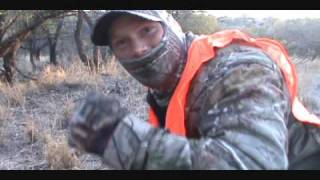 Download Mountain lion hunt at 11 yards Video