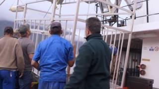 Download Megalodon: The Monster Shark Lives Video