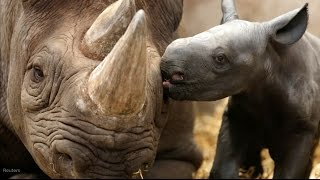 Download 14 endangered species to know Video