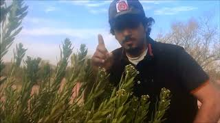 Download رحلة بسيطة عبيد العوني محمية التنهات الاشجار البرية Video