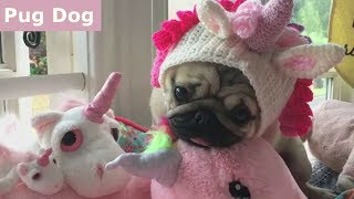 Download Funniest and Cutest Pug Dog Videos Compilation 2017 [BEST OF] Video