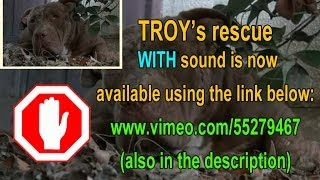 Download Troy - a must see amazing Pit Bull Rescue - Please share. Video