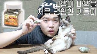 Download 고양이마약을 처음 경험한 가을이 - 스팀보이 Video